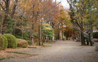 autumn in Tokyo1 dec2013