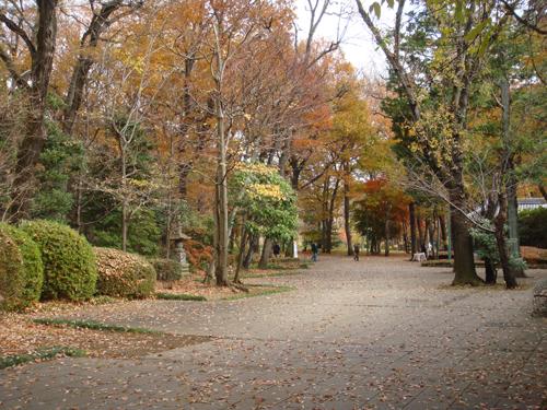 autumn in Tokyo1 dec2013 500pt