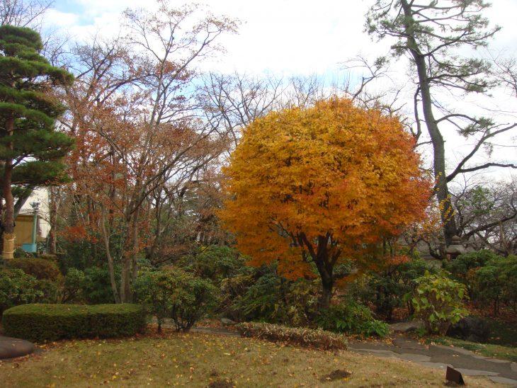winter in Tokyo 2013
