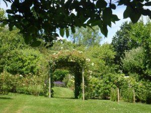 Bates' man 4 july2016.JPG garden