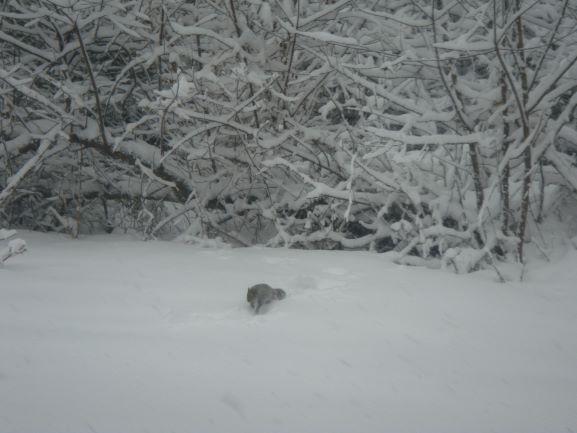 snow at John 16 2013March