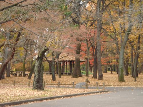 autumn in Tokyo dec2013 500pt